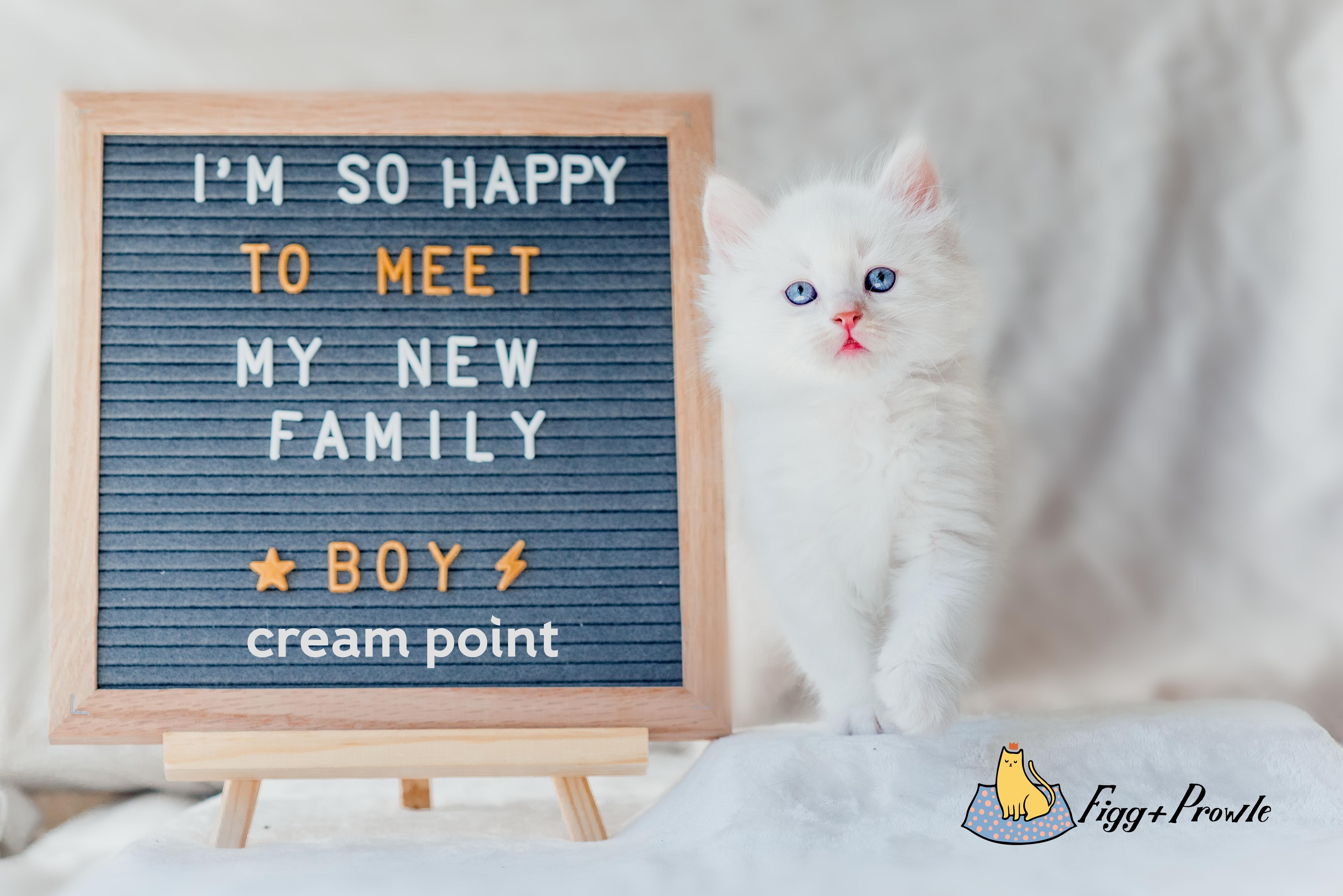 Bones' cream point boy